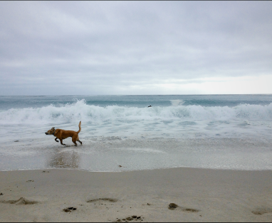 Hank E. Hankerton chasing Pacific waves in CA